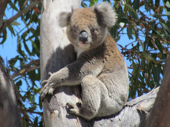 Australie 2012
