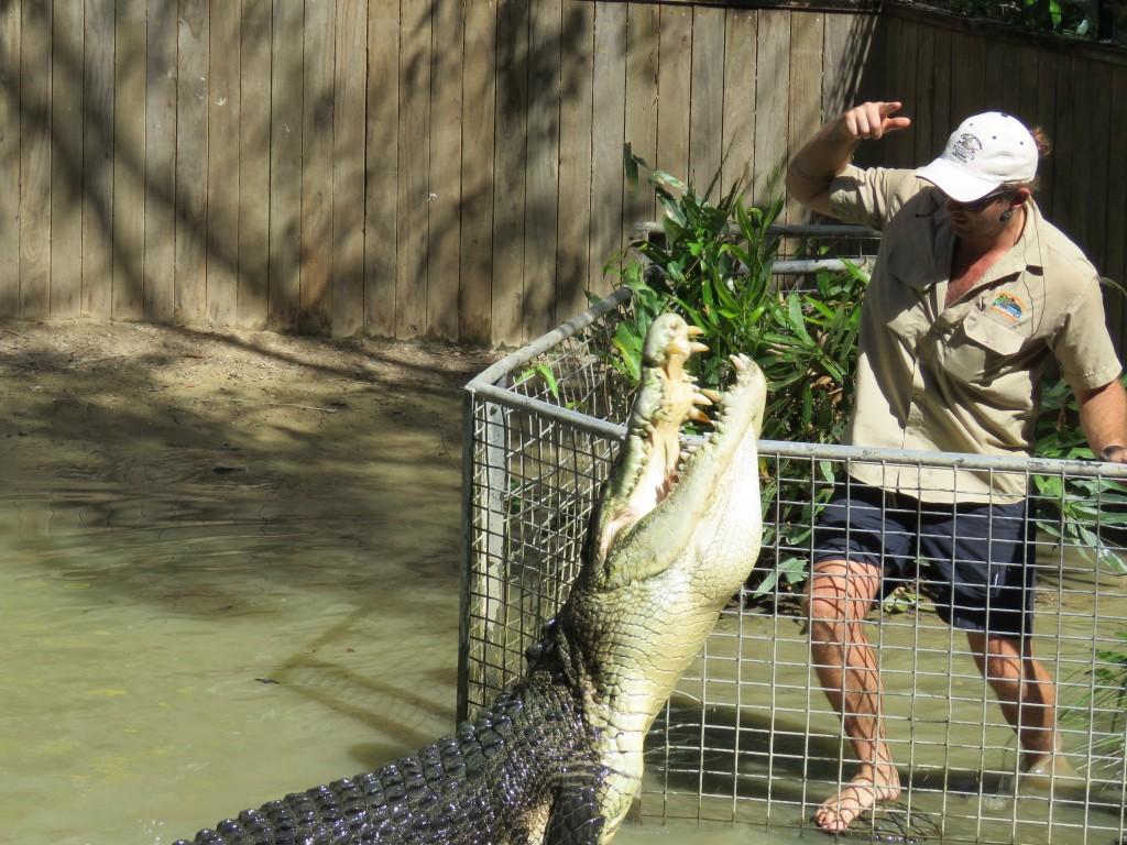 resten van mens gevonden in krokodil